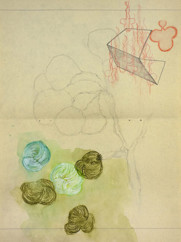 tekeningen-herbarium